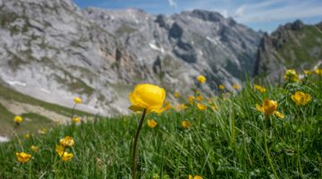 Wanderung durchs Reintal – von der Partnachklamm via Gatterl nach Tirol