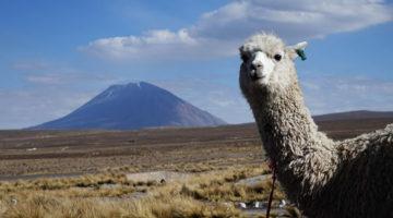 Unsere erste Reise durch Südamerika – Zusammenfassung