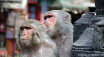 kathmandu monkeytempel