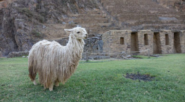 Ollantaytambo, unsere letzte grosse Inka-Ruine