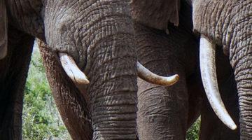 pinterest suedafrika wildcard
