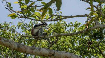 Die 3 besten Tagesausflüge auf Sansibar