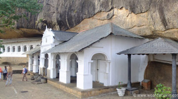 Wilde Affen & Höhlentempel in Dambulla