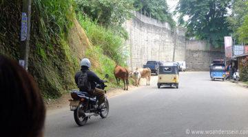 Von Dambulla zum heiligen Zahn in Kandy