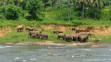 Die Elefanten von Pinnawala & ein Auto namens TATA Nano