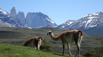 W-Trail Wanderung im Torres del Paine Nationalpark