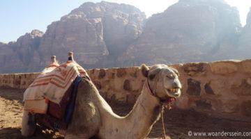 Von Wadi Rum nach Petra