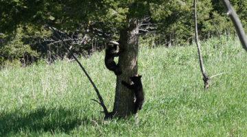 Yellowstone National Park – Roadtrip der Extraklasse